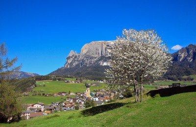 fruhling-in-den-bergen-fruhlingserwachen-seiser-alm_2