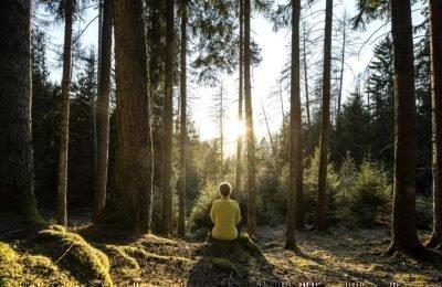 Mentale Stärke aus Wald und Wurzeln